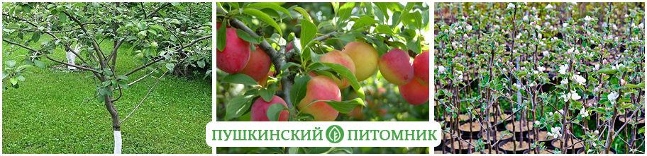 Саженцы плодовых деревьев купить